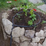 come utilizzare sassi dell'orto