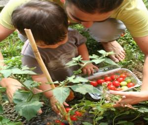 come fare orto ecologia