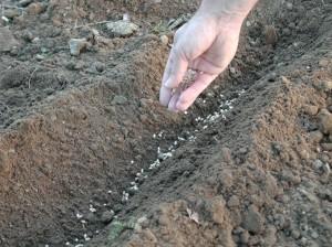 come fare orto semina