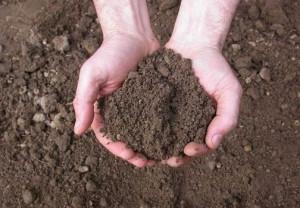 come fare orto terreno per la semina