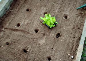 come fare orto la semina e il trapianto