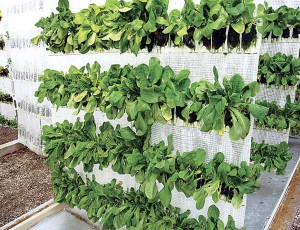 orto sul balcone fenomeno orto come fare orto