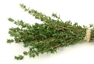 timo pianta aromatica