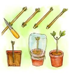 talea come fare orto