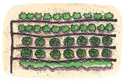 Casa immobiliare accessori irrigazione a goccia per orto for Accessori irrigazione