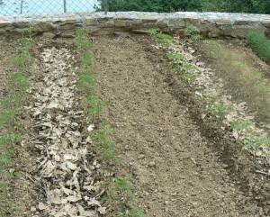 bagnare come fare orto