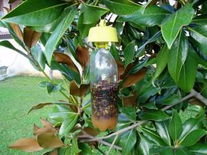 trappola insetti per orto