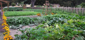 rotazione delle colture come fare orto