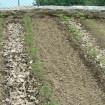 Come bagnare l'orto risparmiando acqua