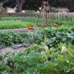 La rotazione delle colture